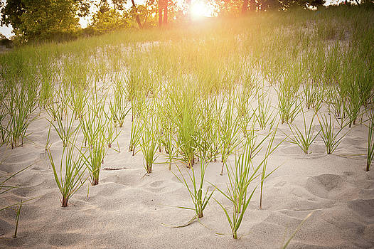 Beach Grasses Number 3 by Steve Gadomski