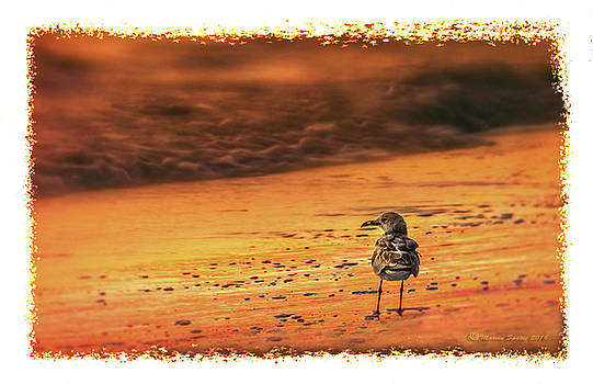 Beach Gull by Marvin Spates