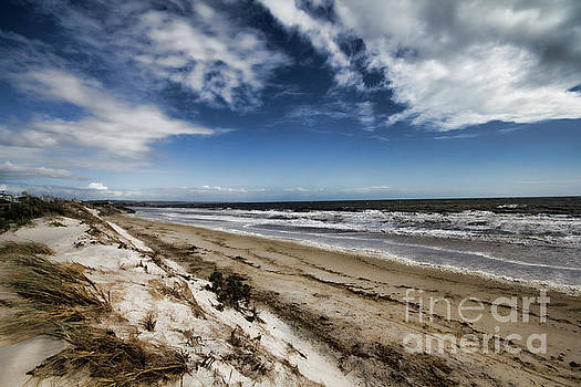Beach Life by Douglas Barnard