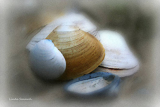Linda Sannuti - Beach shells
