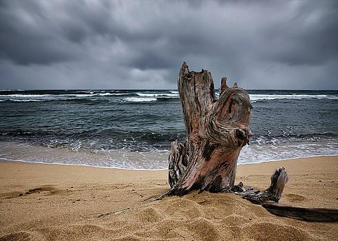 Beach Tree by Steven Michael