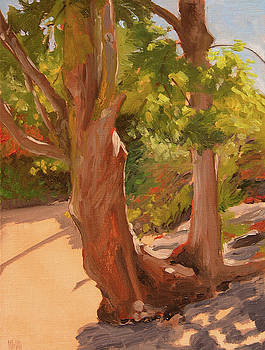 Beach Trees by Mary McInnis