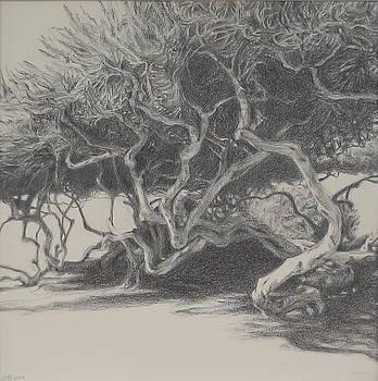 Beachside Trees by Jackie Hoats Shields