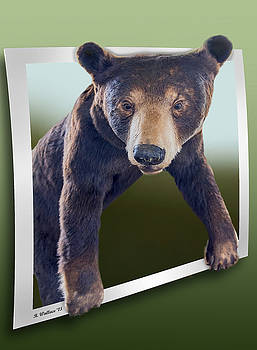 Bear Essentials - OOF by Brian Wallace