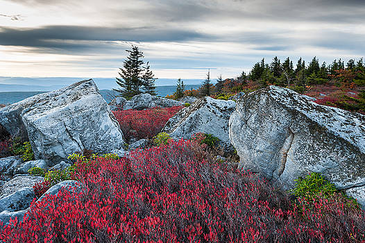 Bear Rocks Preserve West Virginia by Mark VanDyke