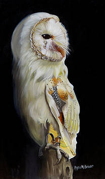 Beautiful Barn Owl by Phyllis Beiser