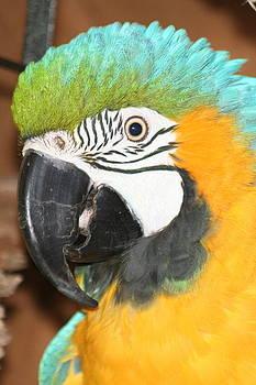 Diane Merkle - Beautiful Bird