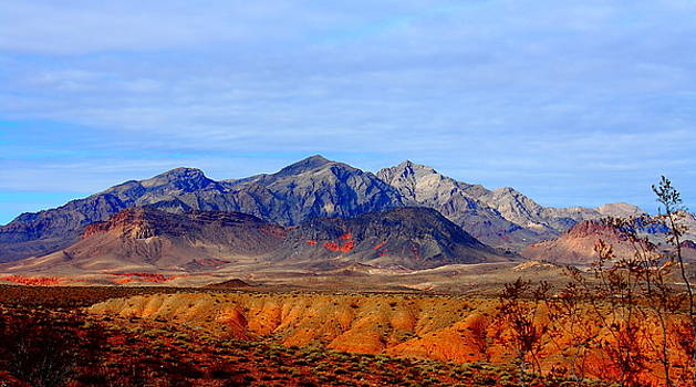 Beautiful Desert by Barbara Teller