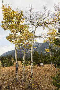 James BO  Insogna - Beautiful Horse Autumn Aspen Trees Grove Grazing