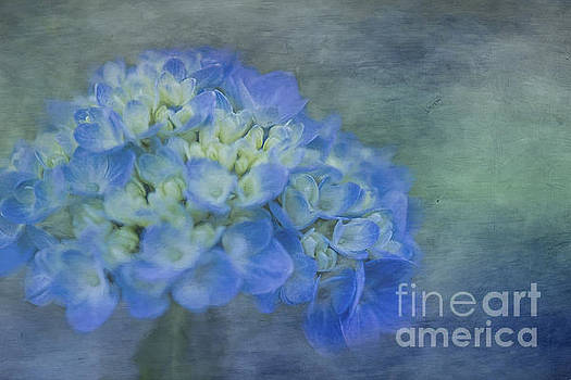 Beautiful in Blue by Linda Blair