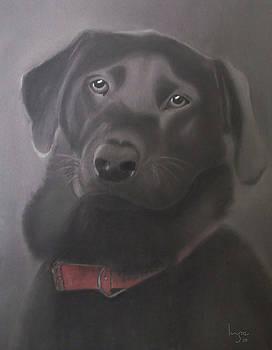 Inge Lewis - Beautiful Labrador Retriever