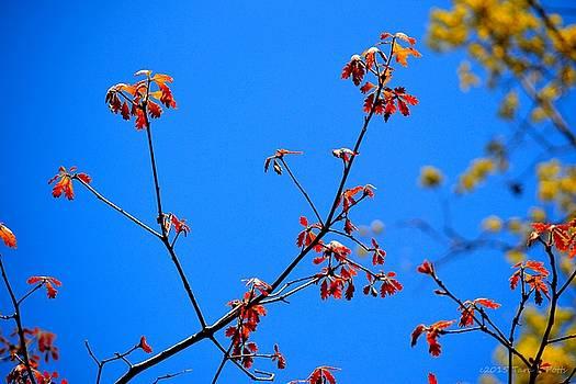 Beautiful Nature by Tara Potts
