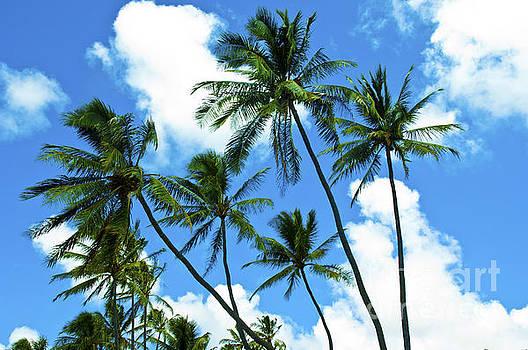 Beautiful Palms of Maui 12 by Micah May