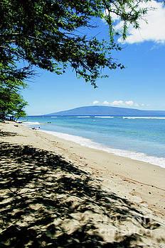 Beautiful Palms of Maui 15 by Micah May