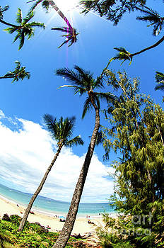 Beautiful Palms of Maui 17 by Micah May
