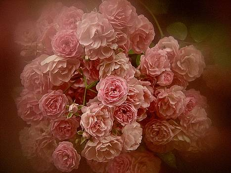 Beautiful Roses 2016 No. 3 by Richard Cummings
