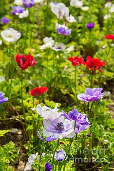 Jamie Pham - Beautiful spring flowers in bloom.