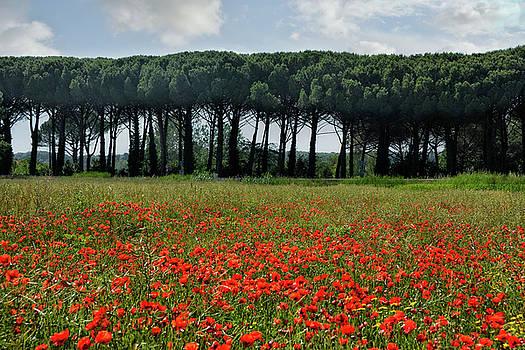 Beautiful Tuscany by Joachim G Pinkawa
