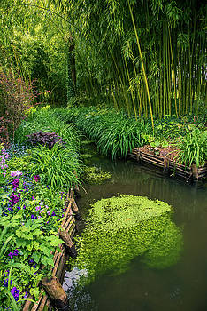 Beautiful water path along bamboo forest by Zina Zinchik