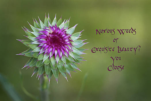 Beautiful Weeds by Kathy Clark