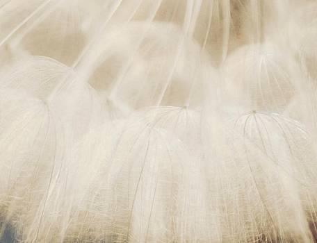 Beautiful Wish by The Art Of Marilyn Ridoutt-Greene