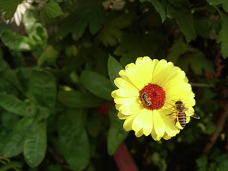 Beautiful yellow flower with small bee by Ashish Agarwal