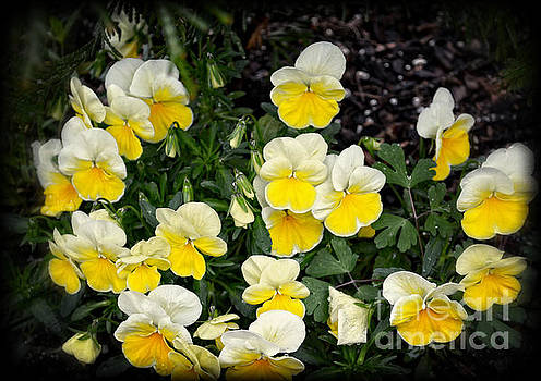 Beautiful Yellow Pansies by Eva Thomas