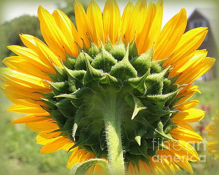 Beauty All Around - Sunflower by Dora Sofia Caputo Photographic Art and Design