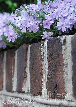 Beauty and Bricks by Linda Mesibov