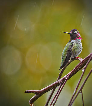 Beauty in the Rain  by Rob Mclean