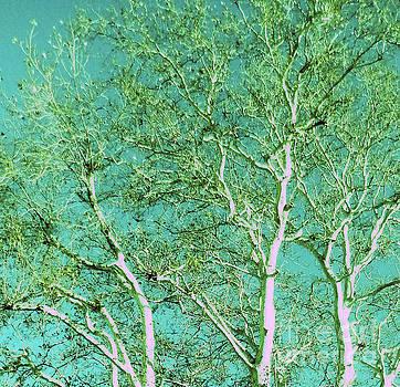 Beauty Of An Aqua Sky by Ann Johndro-Collins