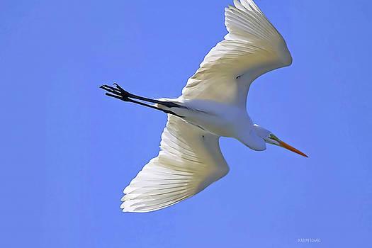 Deborah Benoit - Beauty Of Flight