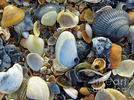 Beauty Of The Shells by D Hackett
