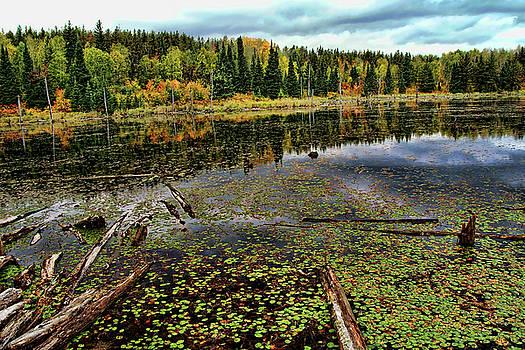 Beaver Pond by Bill Morgenstern
