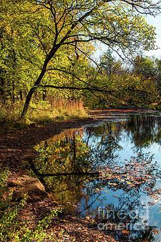 Beaver's Pond by Iris Greenwell