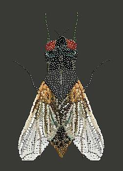 Bedazzled Housefly Transparent Background by R  Allen Swezey