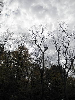 Bedford Reservation 2015 2 by Barbara Keith