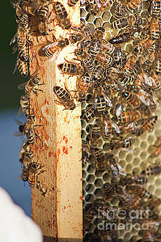 Bee Hive 4 by Janie Johnson