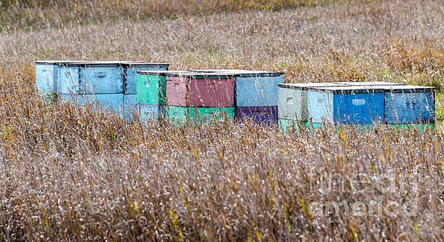 Bee Hives by Mary Carol Story