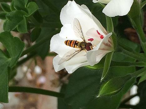 Bee in the flower by Irina Zelichenko