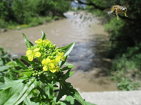 Bee Landing by Barry Miller