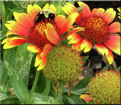 Bee on colorful flowers by Mikki Cucuzzo