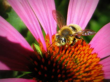 Bee On Flower by Debi K Baughman