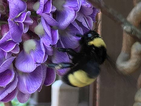 Bee on Native Wisteria I by Angela Annas