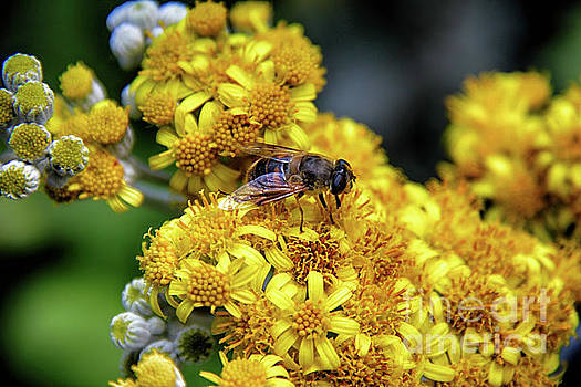 Bee one with Nature by Mariola Bitner