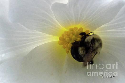 Bee Positive by Brenda Leitow
