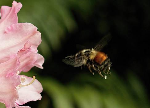 Marilyn Wilson - Bee Mine Tonight