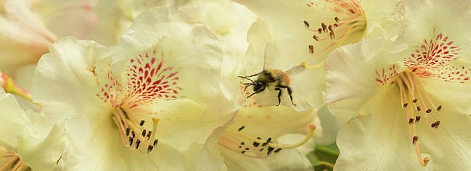 Marilyn Wilson - Bee My Honey