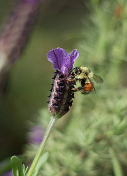 Marilyn Wilson - Bee the One