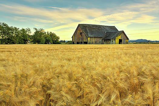 Before the Harvest by Bob Stevens